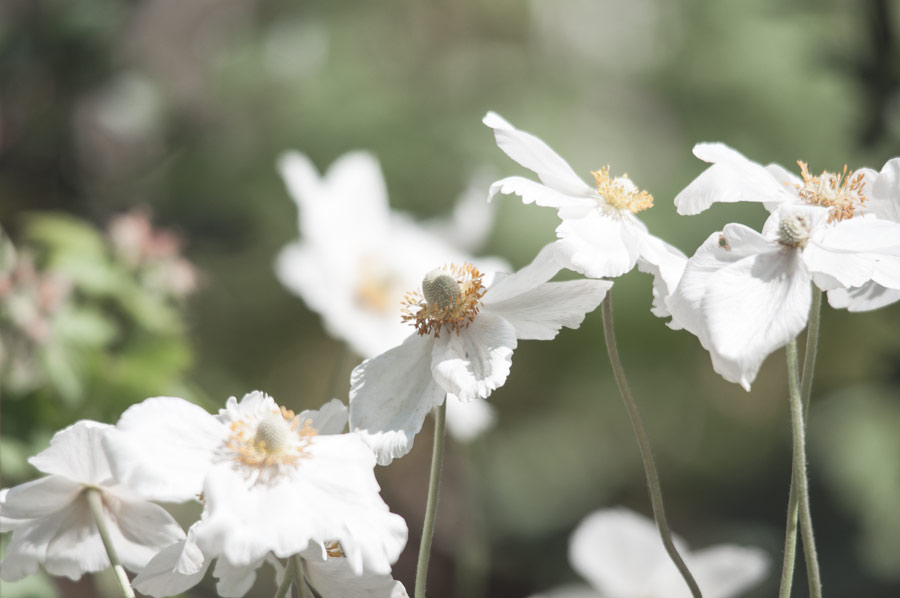 Mein Garten im Frühling