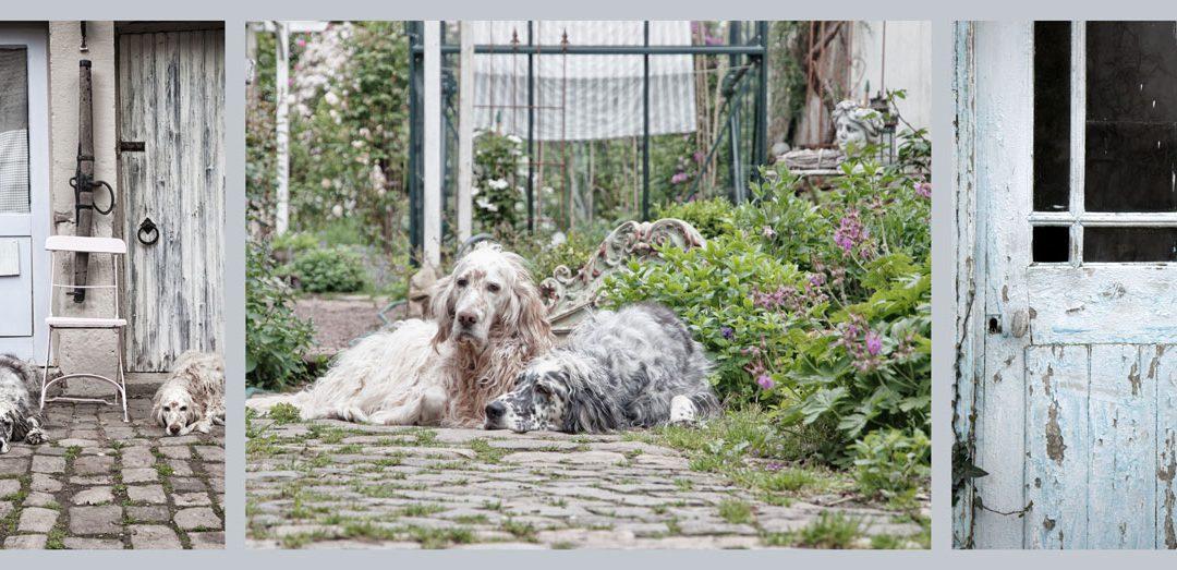 Gundi's Setter & ihre Gartenliebe