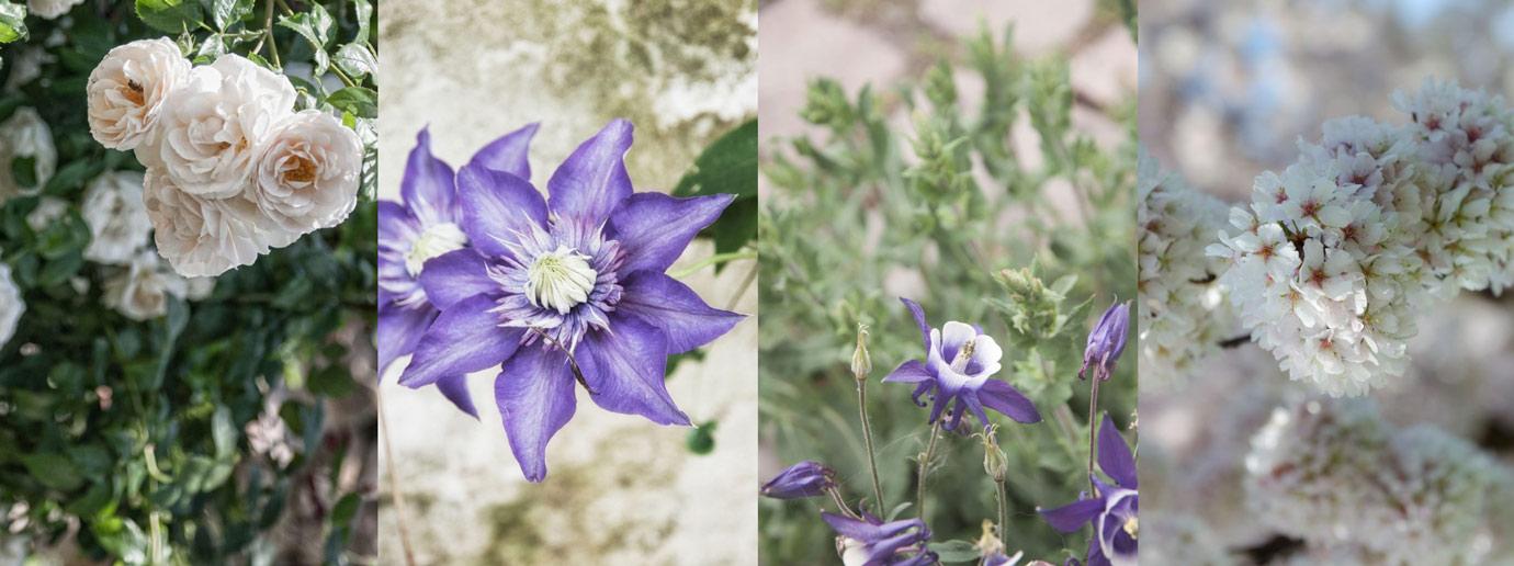 Gartenblog mit Tipps zur Gartengestaltung und Gartendeko