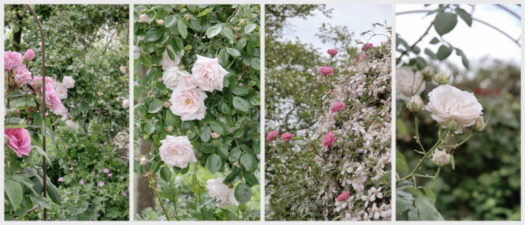 Gartenblog über einen Rosengarten in der Pfalz