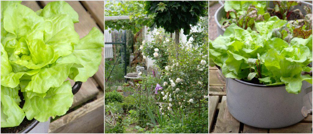 Rosen und Gemüse im Garten