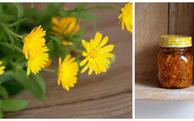 Ringelblumensalbe oder: Jetzt wird es gelb!