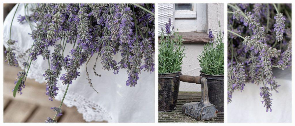 Lavendel im lila Garten