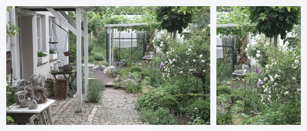 Gartenblog Rosen