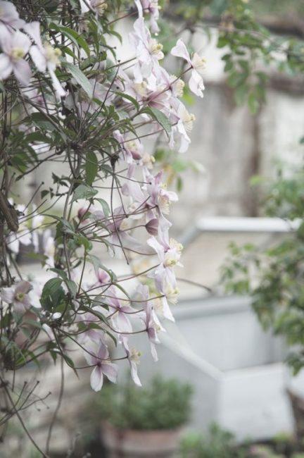 Gartenblog von Gundis garden