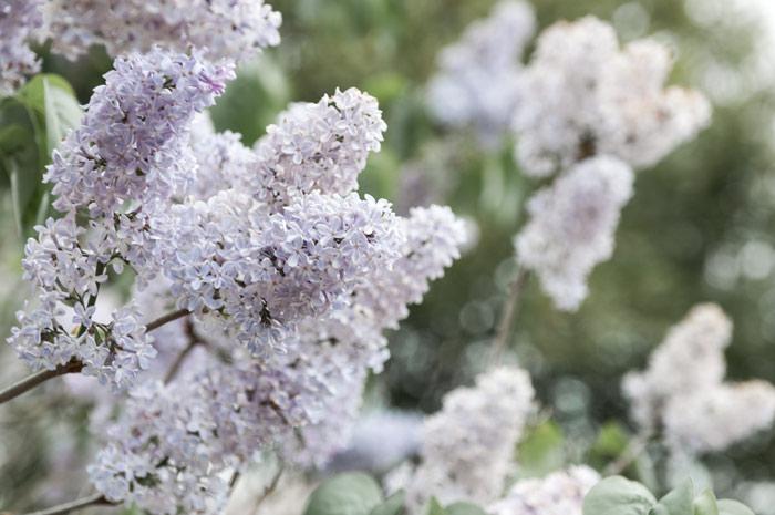 Winter Ade – Grüße zum Frühlingsanfang