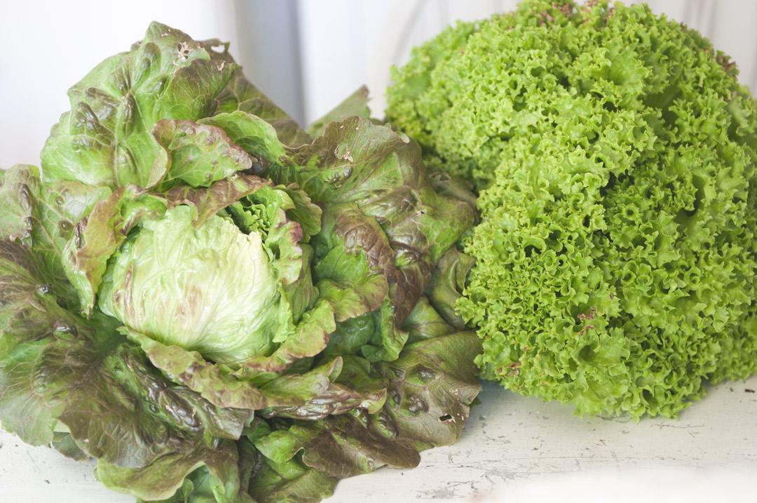 Salat und Gemüse im Garten